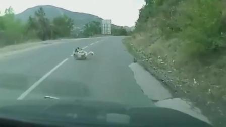 实拍狗狗过马路不看车结果被撞飞