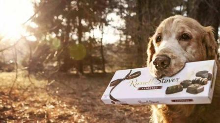 为什么都说绝对不能给狗吃巧克力? 有什么后果吗, 看完一定要记住