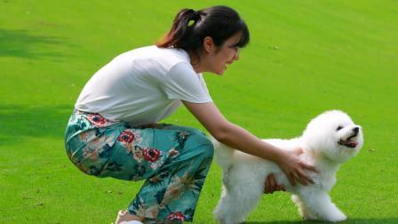 世界动物日,深圳最好玩的宠物嘉年华!
