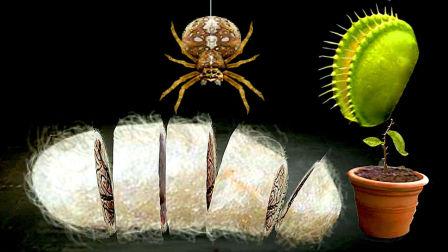 【小熙解说】种子搞怪器 模拟一颗捕蝇草被蜘蛛缠成茧最后还变成牛排
