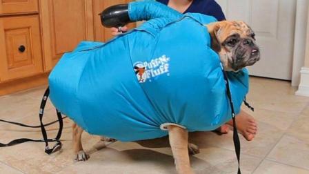 狗狗洗澡不好干穿上这件衣服再调皮也烘干了