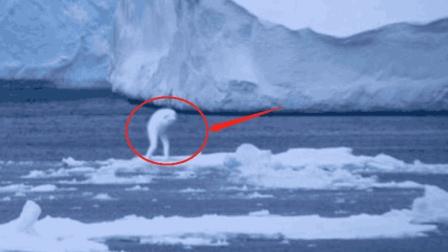 南极发现30米高怪物, 科学家也无法解释, 是外星文明还是新生物?