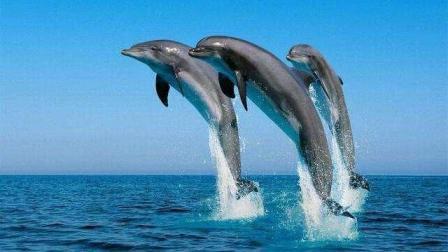 沟通能手, 海豚居然能听懂人类讲话, 动物也是有