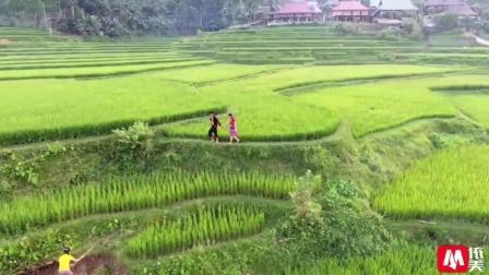 感受越南农村苗族姑娘田园生活, 这里苗族姑娘很单纯景色也很美