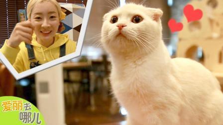 [爱丽去哪儿] 融化你的心! 爱丽带大家体验被萌宠猫猫包围的感觉哦 | 爱丽去哪儿