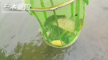 发疯了? 钓获的水库大鲤鱼值千元! 小伙: 不吃不卖送客户!