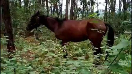 跟我一起郊外遛马吧