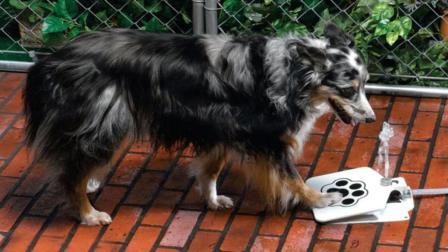 狗狗喝水神器一踩就出水狗狗舔的停不下来