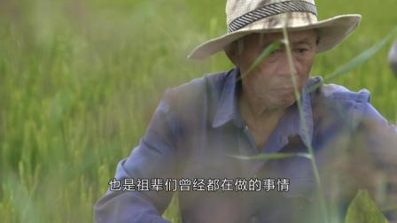 黄河传奇: 发现黄河三角洲上坚持传统种植的生态大米