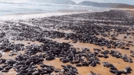 这种海鲜在非洲非常泛滥, 然而却没人敢吃, 中国吃货表示太可惜