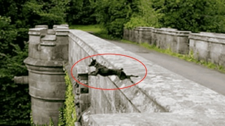 """英国这座""""鬼桥"""", 让600只狗狗跳桥自杀, 科学家最终揪出了桥底凶手"""
