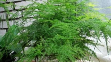 浇水是项大工程, 浇好了云竹才能越长越茂盛!