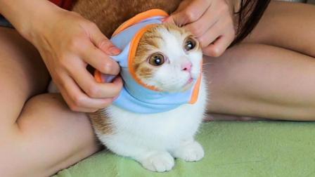 给猫咪换上新衣服, 主人感觉它开心到变形, 猫: 妈这个有点紧……