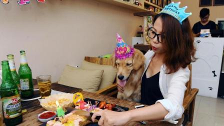 猎狐犬嫉妒主人给金毛过生日, 金毛此时的表情放慢10倍, 笑坏众人!