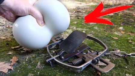 非牛顿流体有多厉害? 老外用老鼠夹实验, 结果遇上对手了!