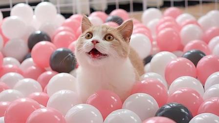 小奶猫饿着肚子被丢进1500个海洋球