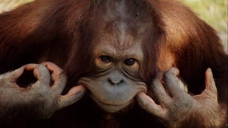 现在的动物都成精了,还好我们进化快......搞笑集锦