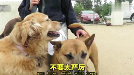 毒角SHOW 中国vs美国, 狗狗与铲屎官的两三事