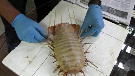 """日本男子爆炒""""外星虫子"""", 肉质像螃蟹, 有人敢吃吗?"""