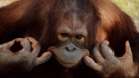 现在的动物都成精了, 还好我们进化快......