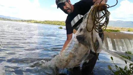 60岁大爷野外撒网捕鱼, 连抛几网, 网网大收获, 是捕鱼的最佳圣地