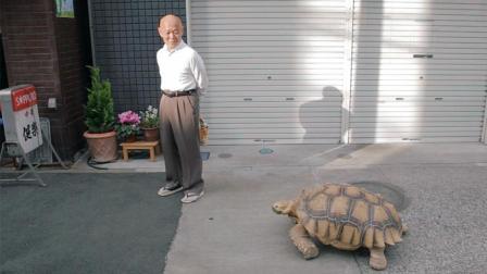 日本老人把乌龟当儿子养了19年 每天都带着140斤
