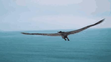 世界上最大的鹰, 身高2米多, 翼展7米, 没有任何天敌!