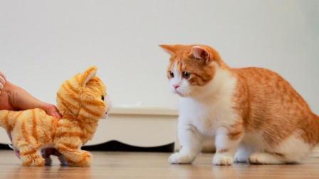铲屎官买只小猫回家, 大猫看到是橘色的, 瞬间惊恐!