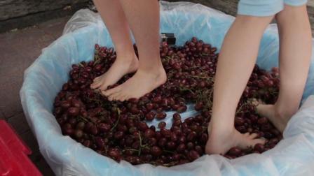世界顶级红酒是用脚踩出来的没钱还喝不到