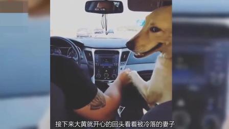 防火防盗防狗子, 狗狗霸占副驾驶还想霸占男主人, 这是个悲伤的故事