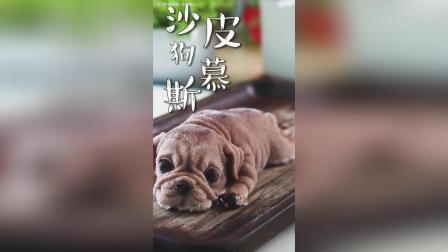 【美食教程】沙皮狗慕斯