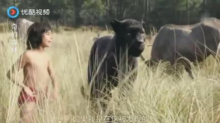 丛林里危机四伏, 老虎伏击人类小孩, 危险时光黑豹和水牛相助