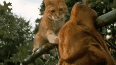 猫狗大战: 猫与狗之间的恩怨从此开始