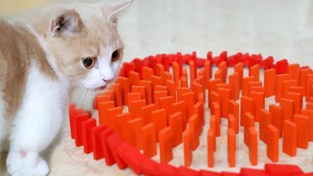 有一种崩溃叫和猫一起玩多米诺骨牌