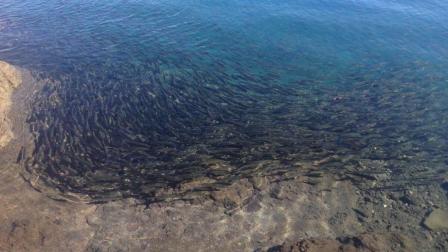 """西藏这湖竟是个天然""""鱼库"""", 为何从来没人敢打捞? 看完毛骨悚然!"""