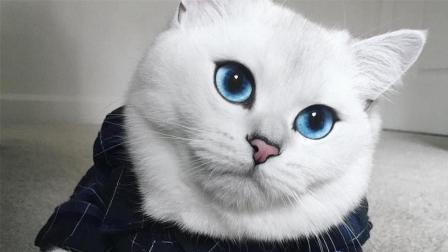 世界上最漂亮的猫, 瞳孔像海一样的深邃, 你被它迷倒了吗?