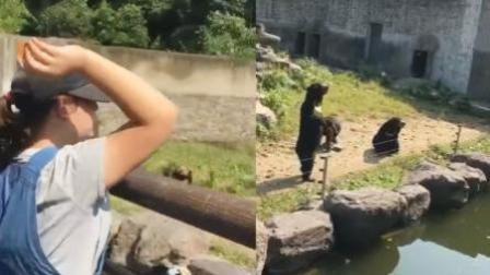游客不断向动物投食 猴子被辣条辣到崩溃
