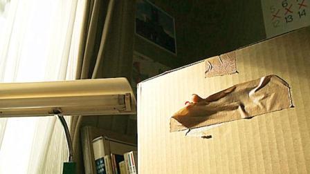 女孩帮邻居代收了一个纸箱子, 放在家中, 却闯了大祸