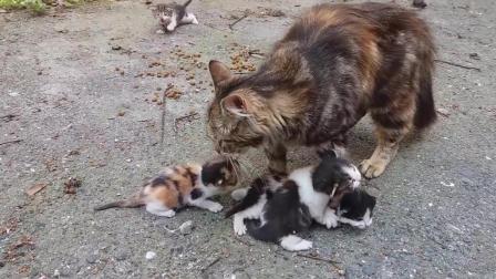 小猫宝宝急着找猫妈妈, 到底是怎么了