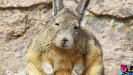 才发现兔子这种生物, 逗比起来也是无药可救的…