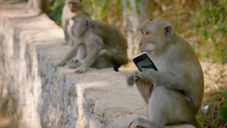 猴子抢走手机怎么办? 国外大叔教你一个妙招, 轻松拿回手机