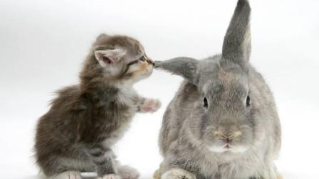 兔子和猫咪在一起养是什么感觉, 一蹦一跳的, 简直太萌了!