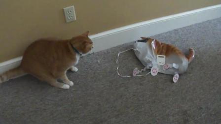主人带回一只充气猫, 被猫咪一巴掌泄了气, 太搞