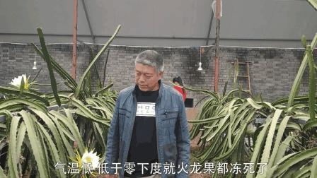 河南老板投资17万的火龙果园, 一年能为他带来多少收入? 会够本吗