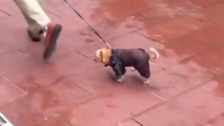 最新搞笑动物视频合集, 第二只熊你是认真的吗