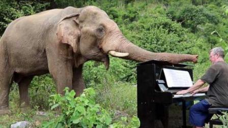 钢琴家走进泰国丛林为保护区大象演奏乐曲