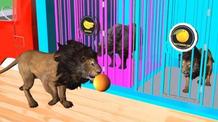 趣味益智动画片 野兽找伙伴
