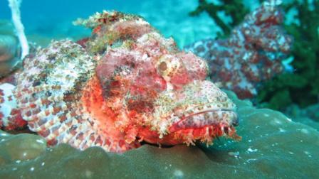 世界上最毒的鱼, 轻松就可以把人置于死地, 却是日本人最爱的美食