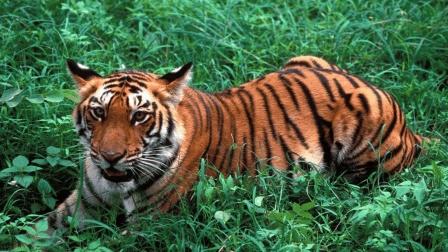 """9岁女孩胆真大, 公园里面遛""""老虎""""? 这是真的!"""