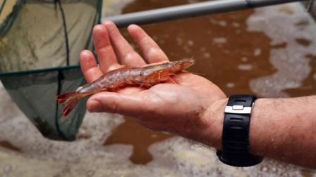 美国小伙在室内养虾, 冬天价格翻倍, 一年赚几十万!